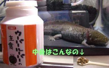 2010062304.jpg